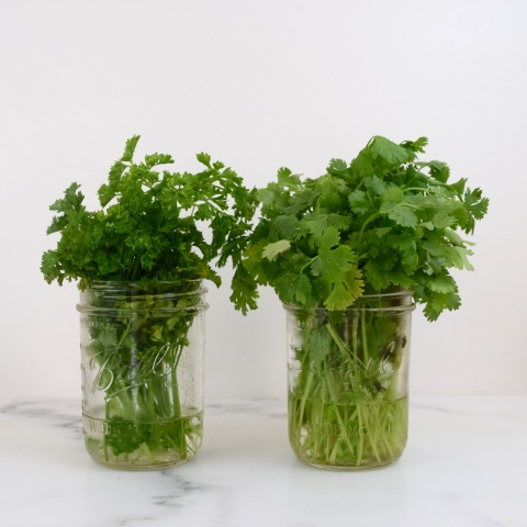 How I Got Fresh Cilantro and Parsley to Last 3 Weeks