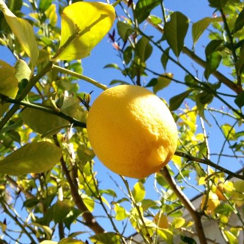 Organic Lemon Poppy Seed Muffins